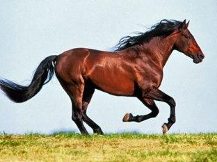 Horse - Beauty