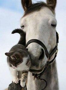 Horse Sweetness