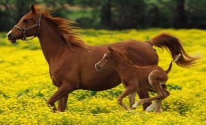 horses-adaptable