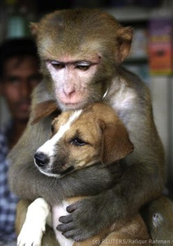 Monkey holding a puppy - photo by REUTERS/Rafiqur Rahman