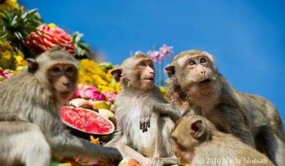 Monkey Feast in Thailand - photo by Nudy Nutsati