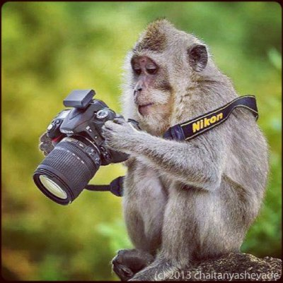 Monkey with Camera - photo by chaitanyashevade